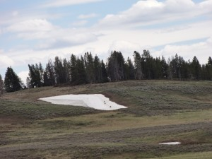 Brown specks in Yellowstone
